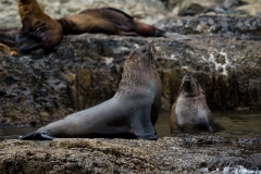 Seal Spa, Tasman Island