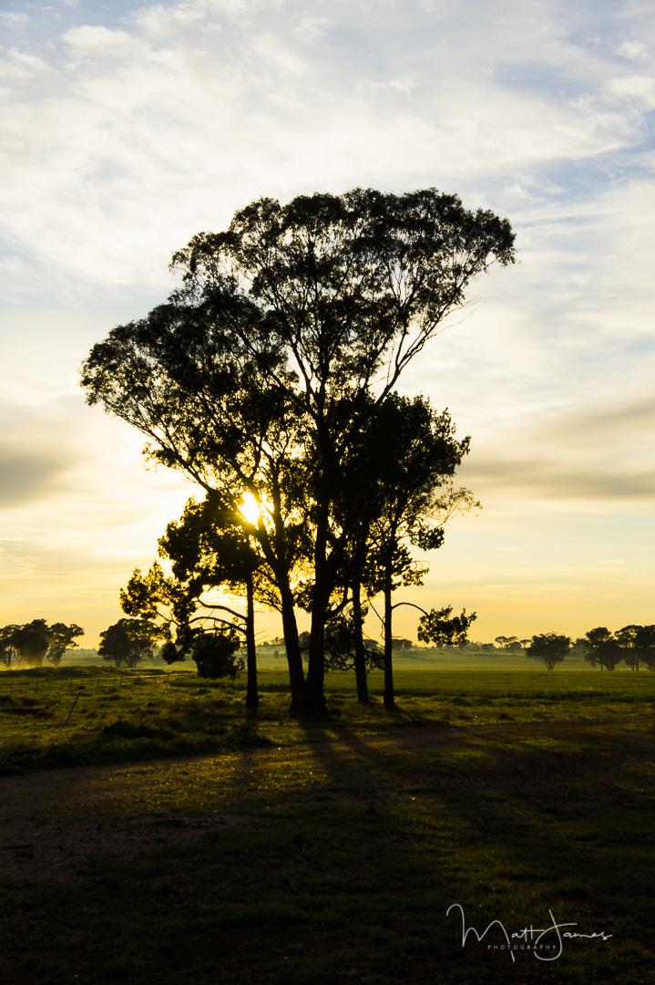 Crisp Country Sunrise, Parkes, NSW