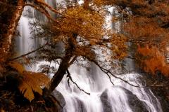 Champagne Falls, Tasmania
